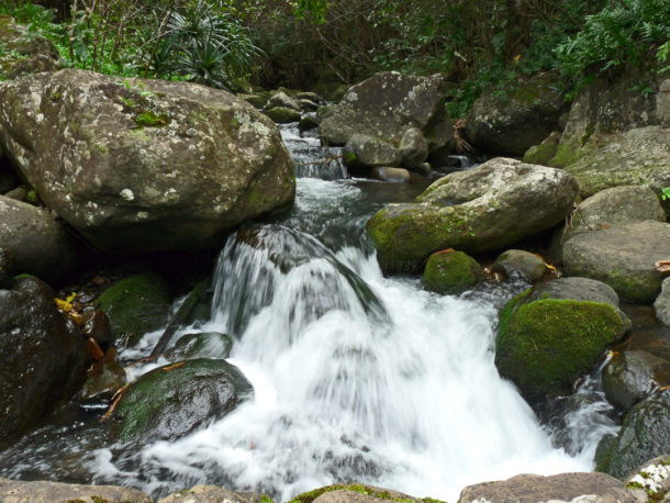 Limahuli Stream is one of the few pristine waterways left in the Hawaiian Islands. Photo: Courtesy National Tropical Botanical Garden.